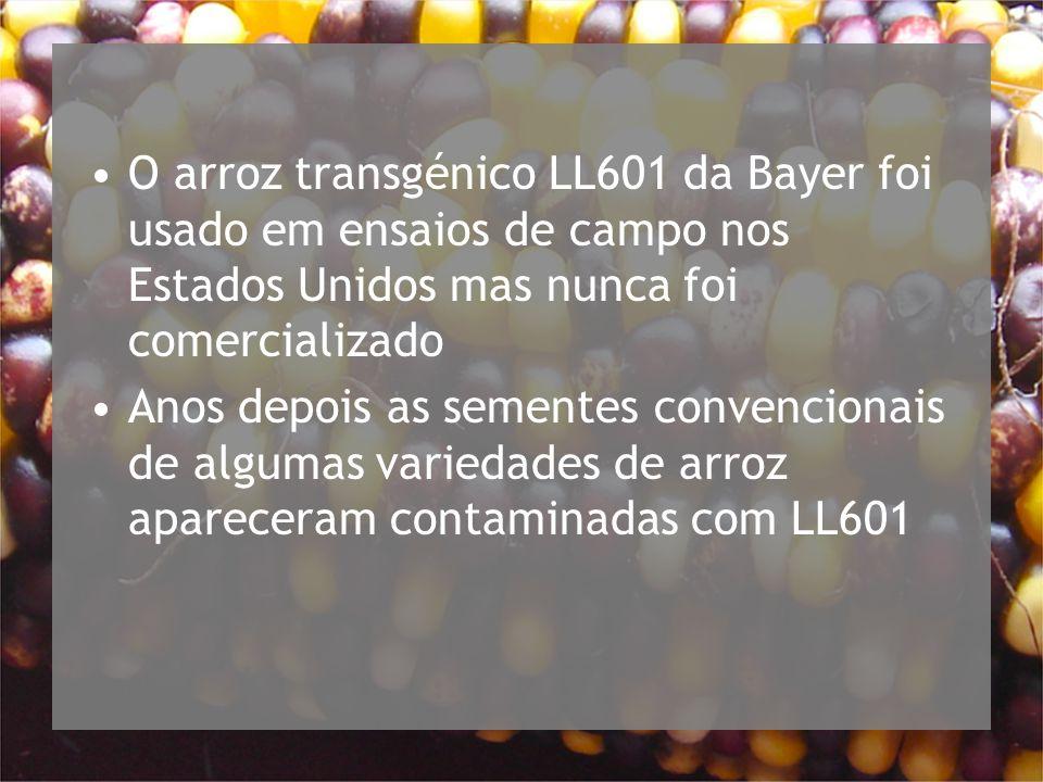 O arroz transgénico LL601 da Bayer foi usado em ensaios de campo nos Estados Unidos mas nunca foi comercializado