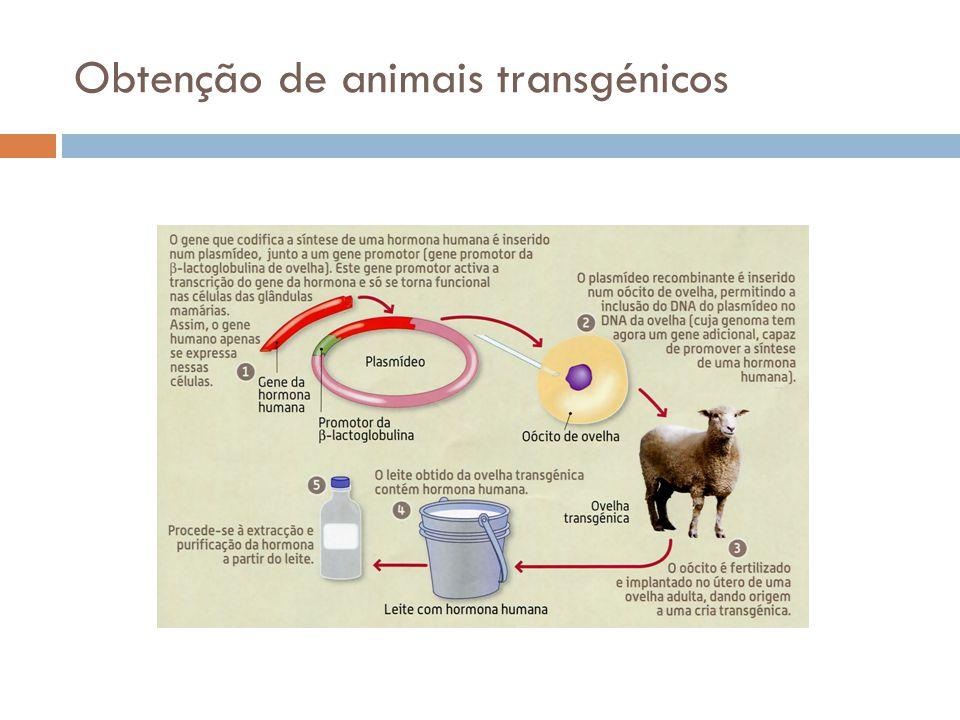 Obtenção de animais transgénicos