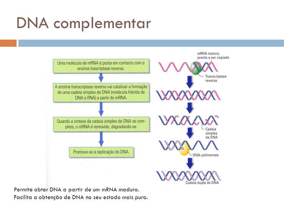 DNA complementar Permite obter DNA a partir de um mRNA maduro.