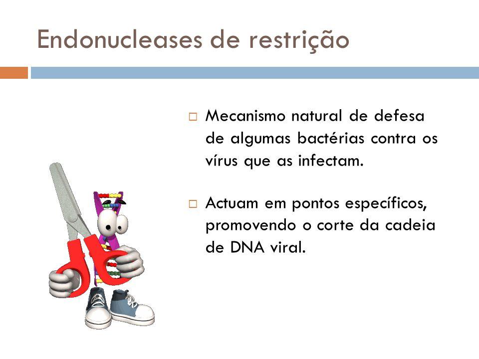 Endonucleases de restrição