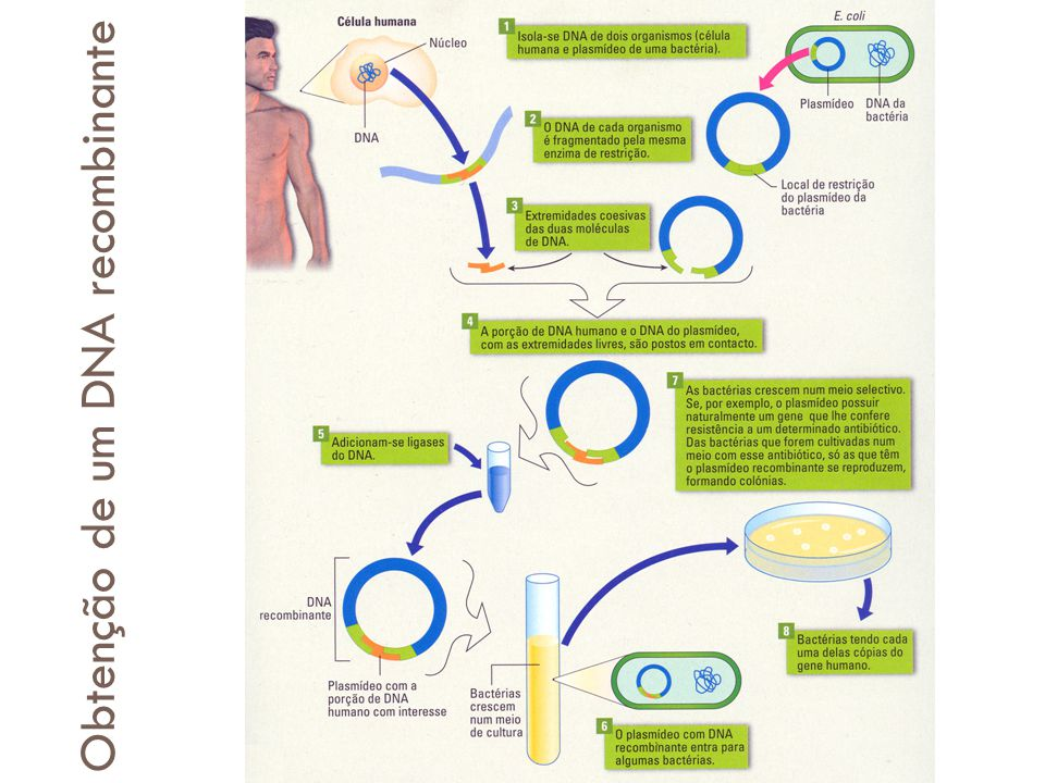 Obtenção de DNA recombinante