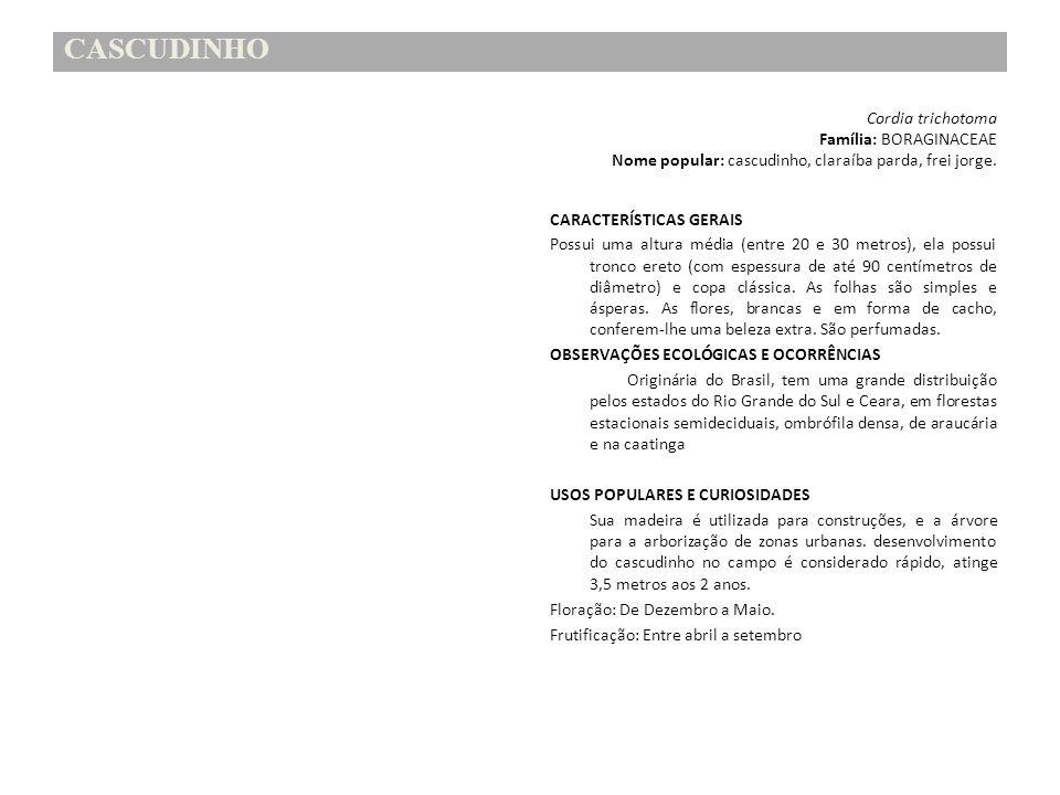CASCUDINHO Família: BORAGINACEAE