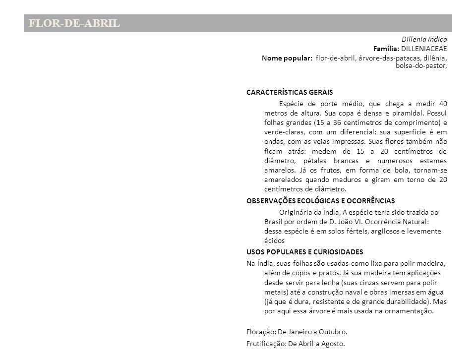 FLOR-DE-ABRIL Família: DILLENIACEAE