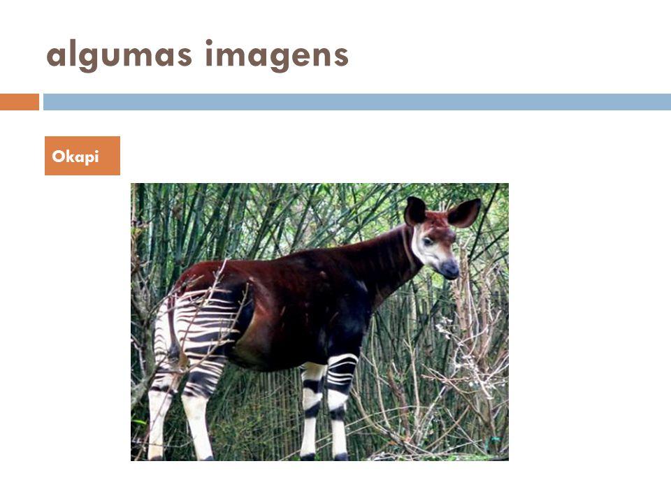 algumas imagens Okapi
