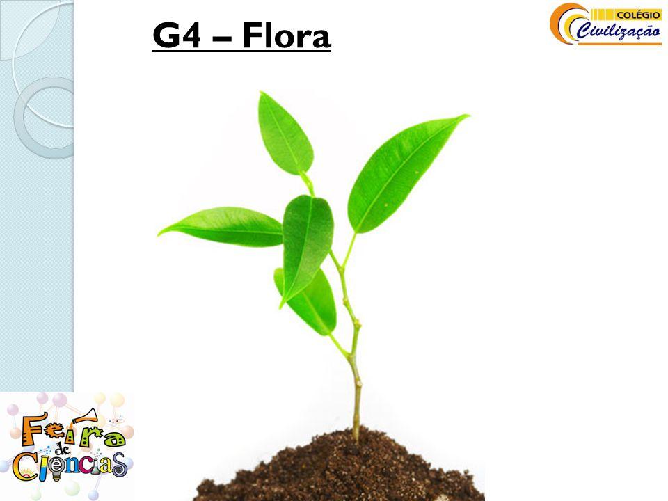 G4 – Flora