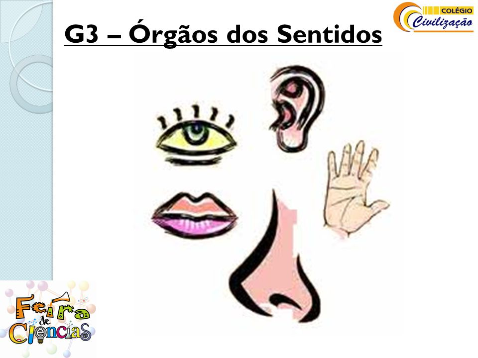 G3 – Órgãos dos Sentidos