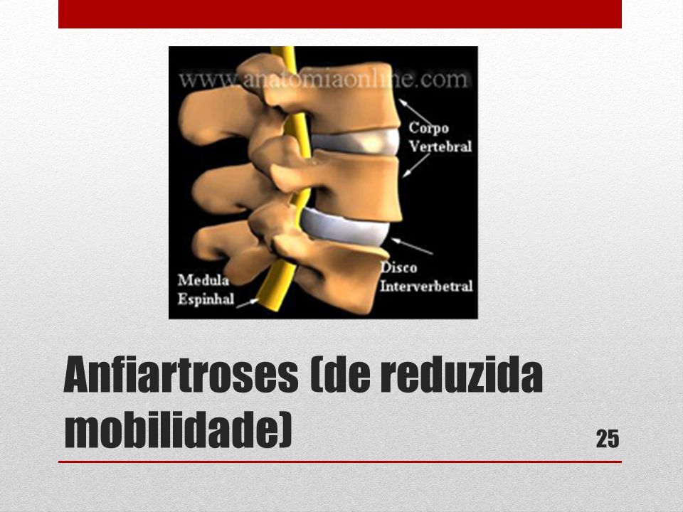 Anfiartroses (de reduzida mobilidade)