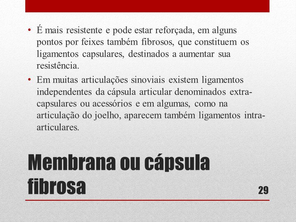 Membrana ou cápsula fibrosa