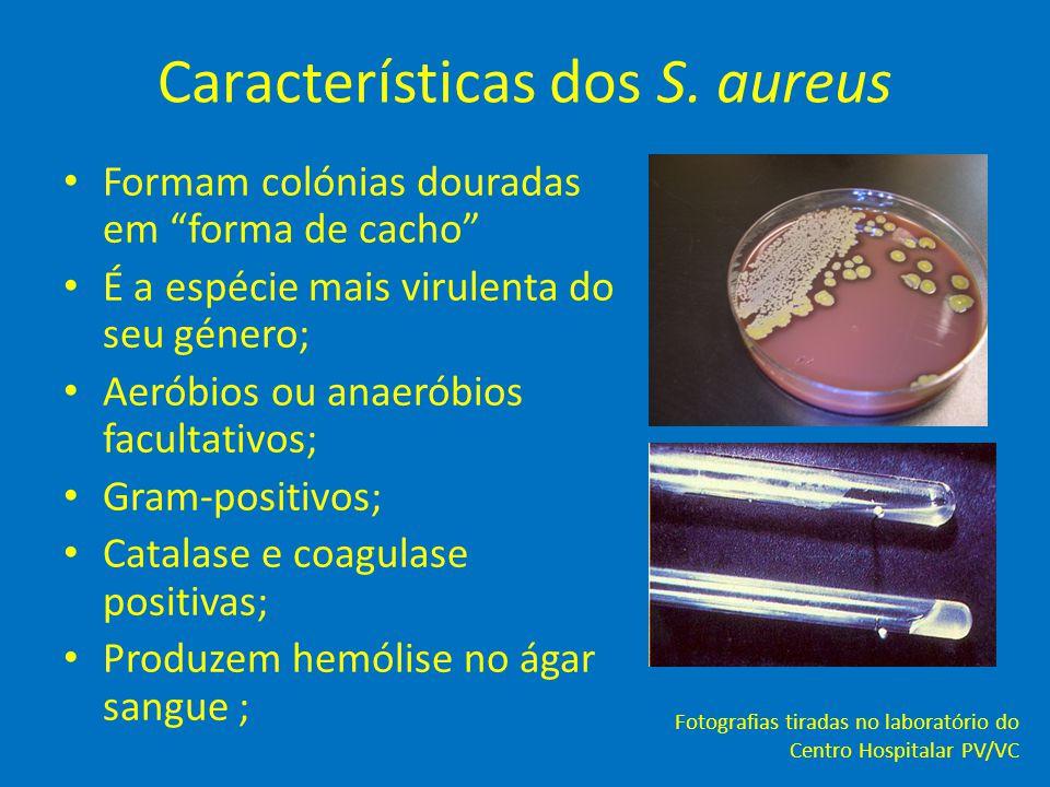 Características dos S. aureus