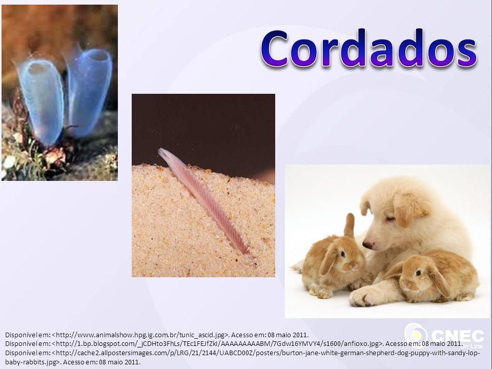 Cordados Disponível em: <http://www.animalshow.hpg.ig.com.br/tunic_ascid.jpg>. Acesso em: 08 maio 2011.