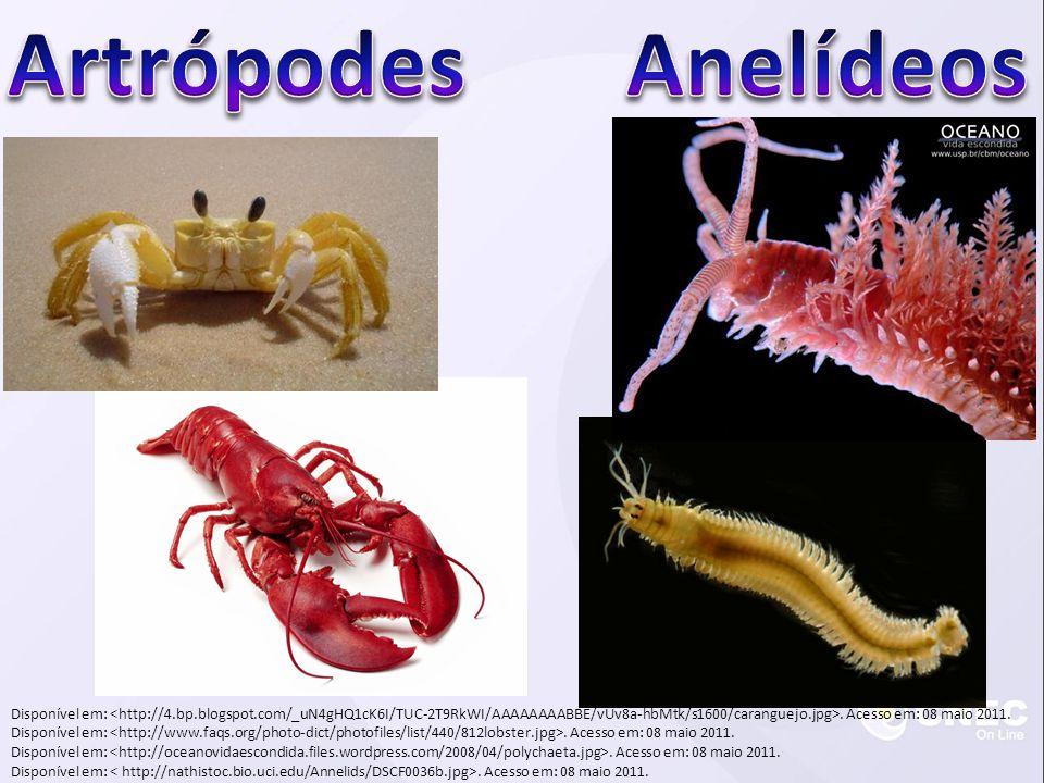 Artrópodes Anelídeos.
