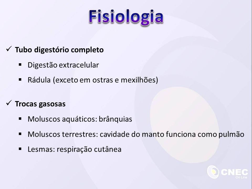 Fisiologia Tubo digestório completo Digestão extracelular