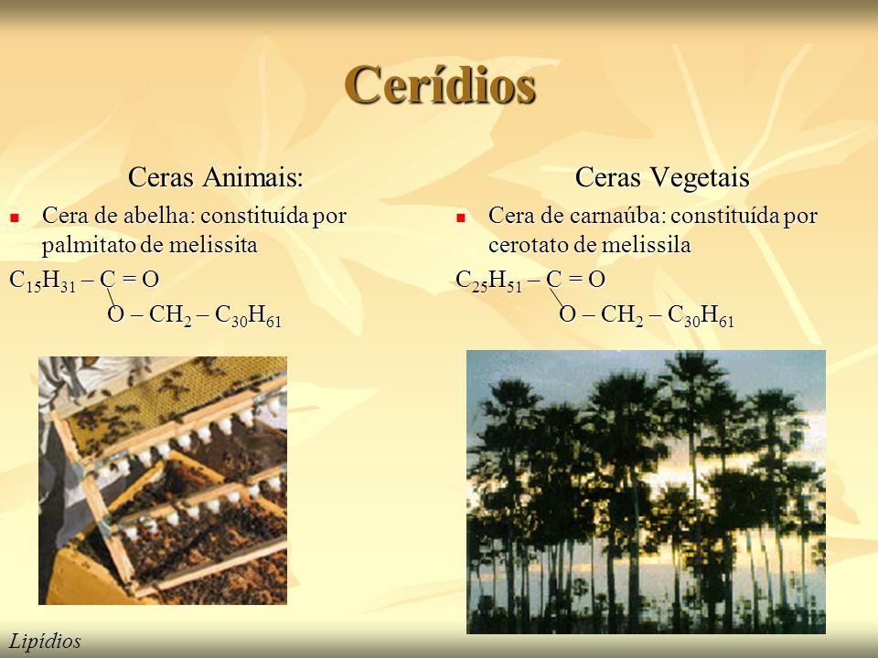 Cerídios Ceras Animais: Ceras Vegetais