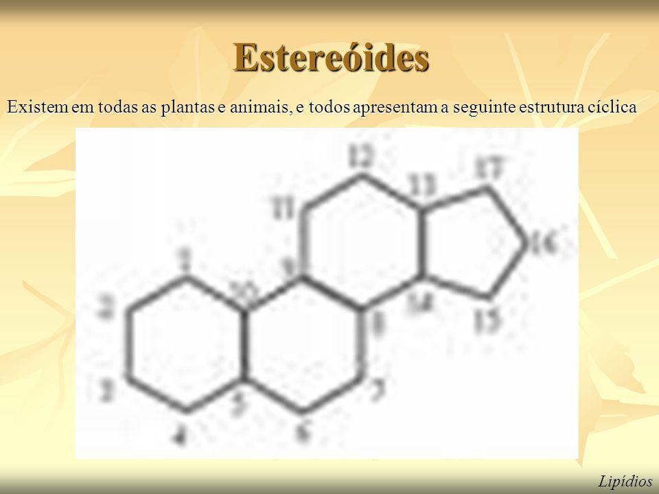 Estereóides Existem em todas as plantas e animais, e todos apresentam a seguinte estrutura cíclica.