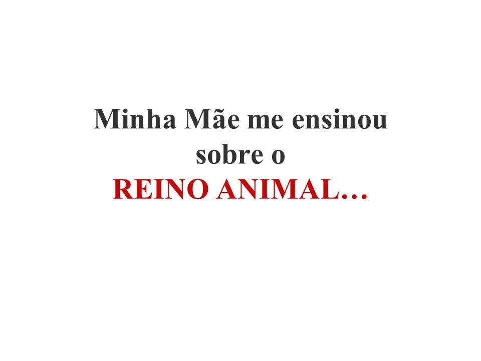 Minha Mãe me ensinou sobre o REINO ANIMAL…