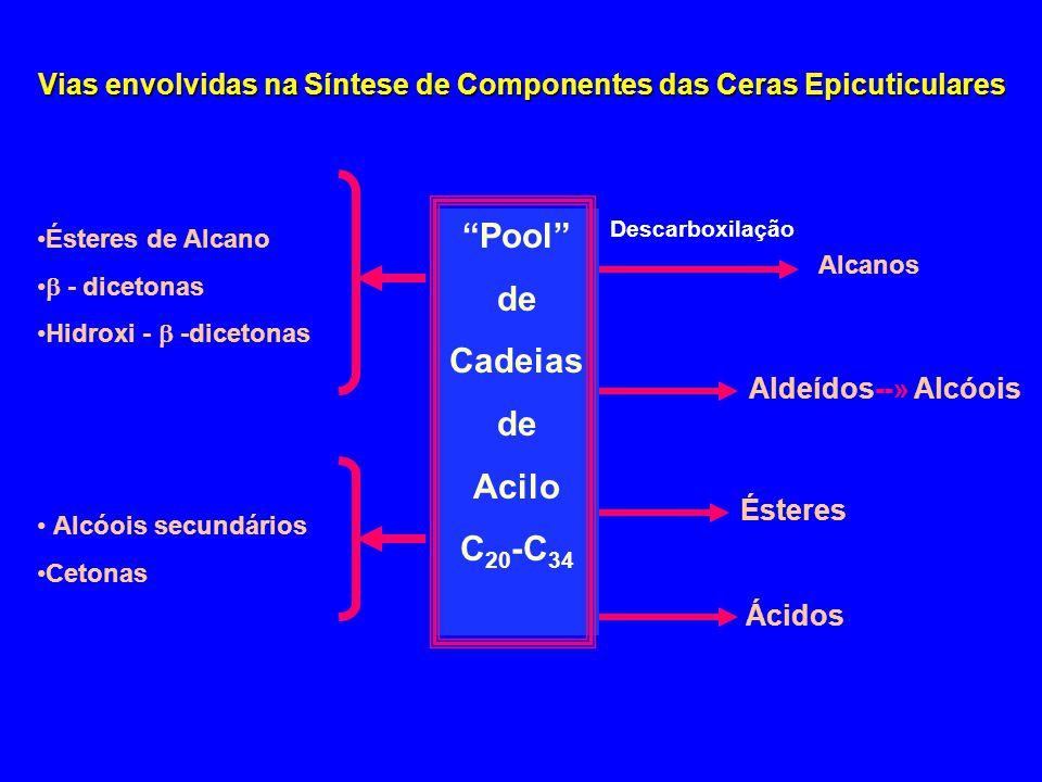 Vias envolvidas na Síntese de Componentes das Ceras Epicuticulares