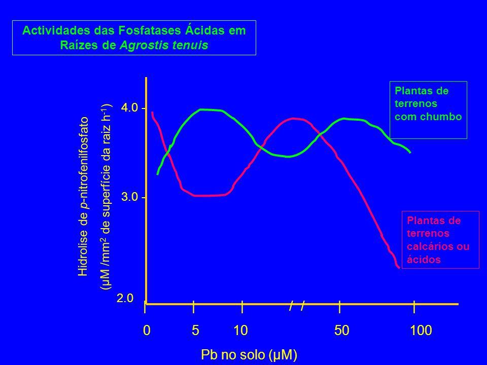 Actividades das Fosfatases Ácidas em Raízes de Agrostis tenuis