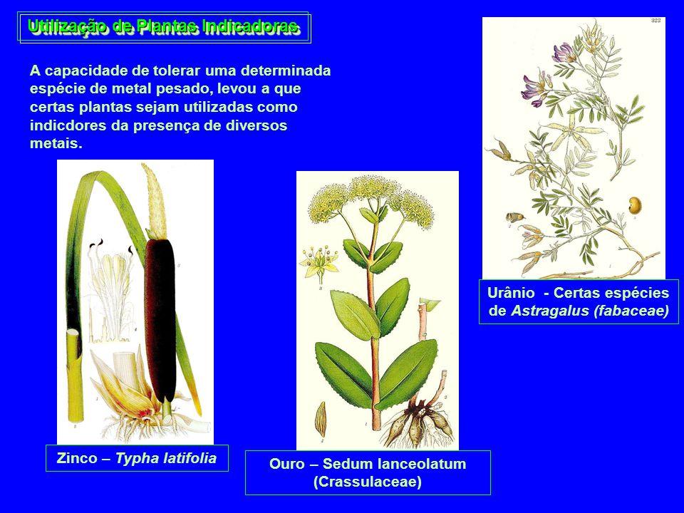 Utilização de Plantas Indicadoras