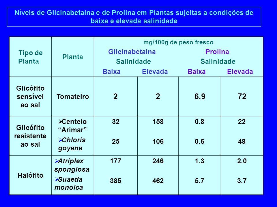 Glicófito sensível ao sal Glicófito resistente ao sal
