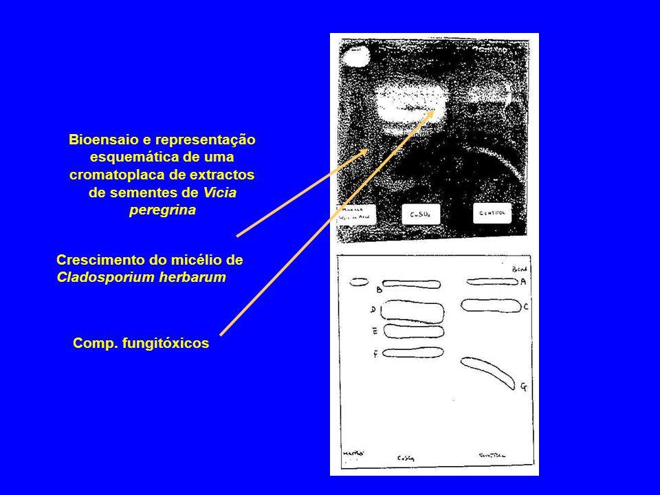 Bioensaio e representação esquemática de uma cromatoplaca de extractos de sementes de Vicia peregrina