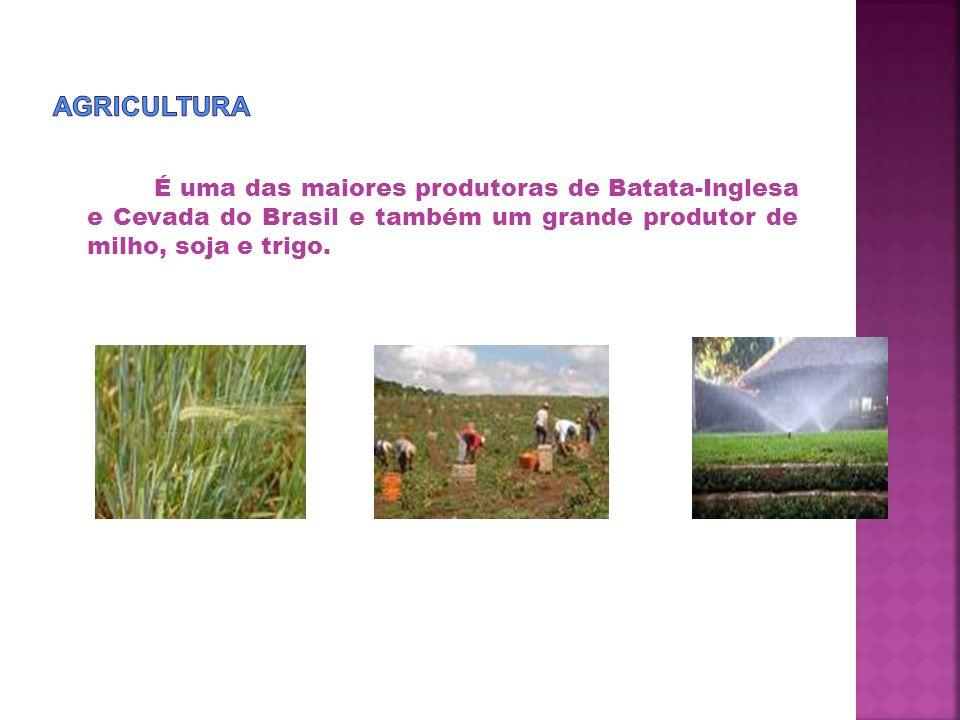 Agricultura É uma das maiores produtoras de Batata-Inglesa e Cevada do Brasil e também um grande produtor de milho, soja e trigo.