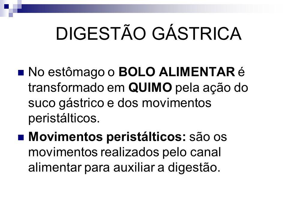 DIGESTÃO GÁSTRICA No estômago o BOLO ALIMENTAR é transformado em QUIMO pela ação do suco gástrico e dos movimentos peristálticos.