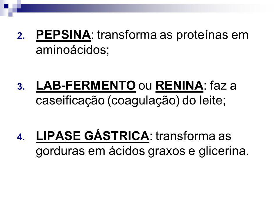 PEPSINA: transforma as proteínas em aminoácidos;