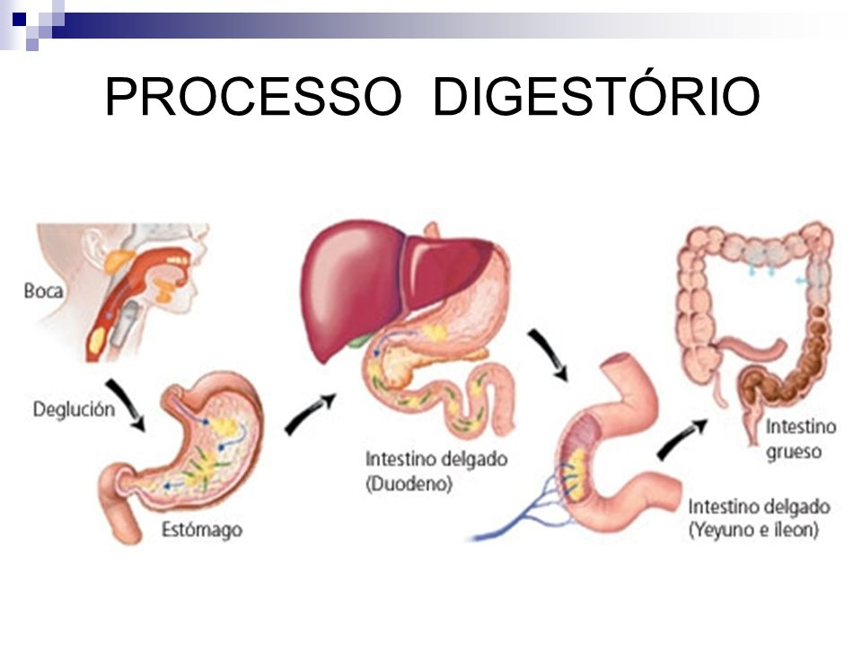 PROCESSO DIGESTÓRIO