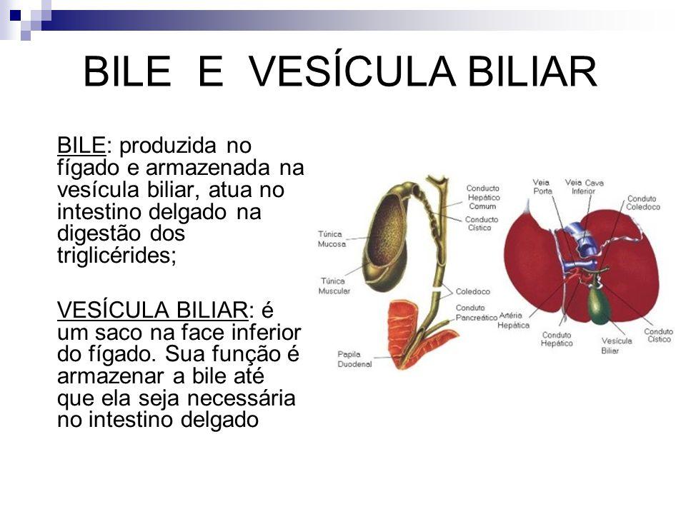 BILE E VESÍCULA BILIAR BILE: produzida no fígado e armazenada na vesícula biliar, atua no intestino delgado na digestão dos triglicérides;