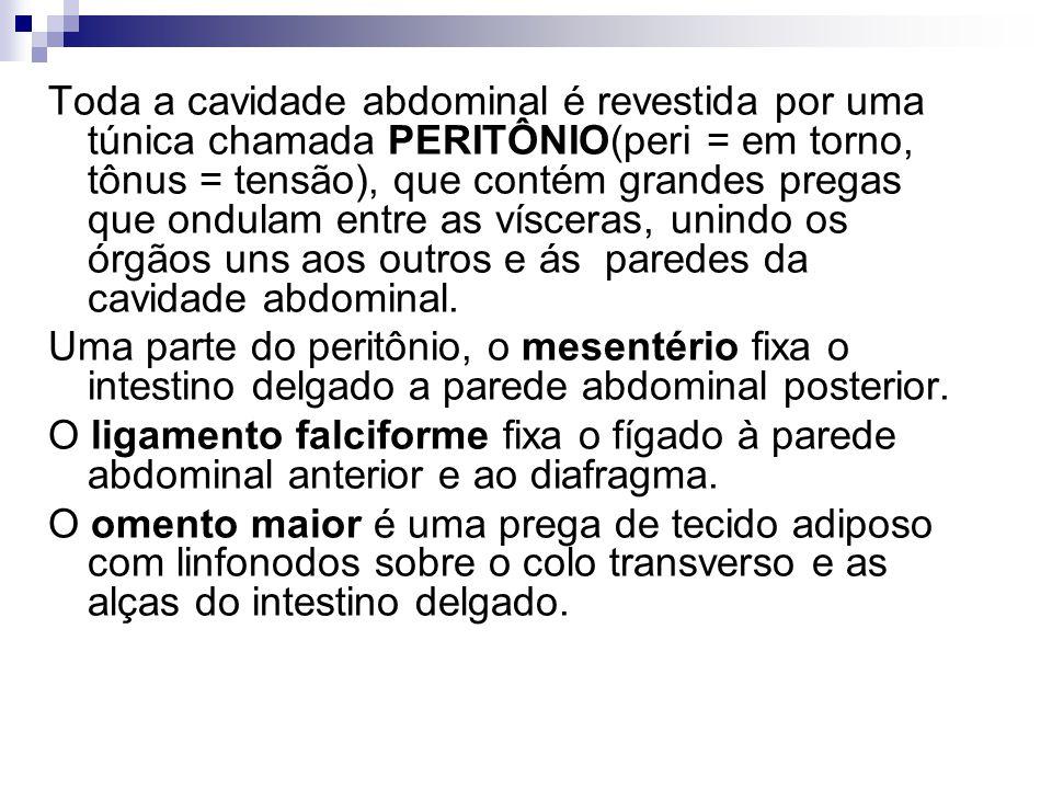Toda a cavidade abdominal é revestida por uma túnica chamada PERITÔNIO(peri = em torno, tônus = tensão), que contém grandes pregas que ondulam entre as vísceras, unindo os órgãos uns aos outros e ás paredes da cavidade abdominal.