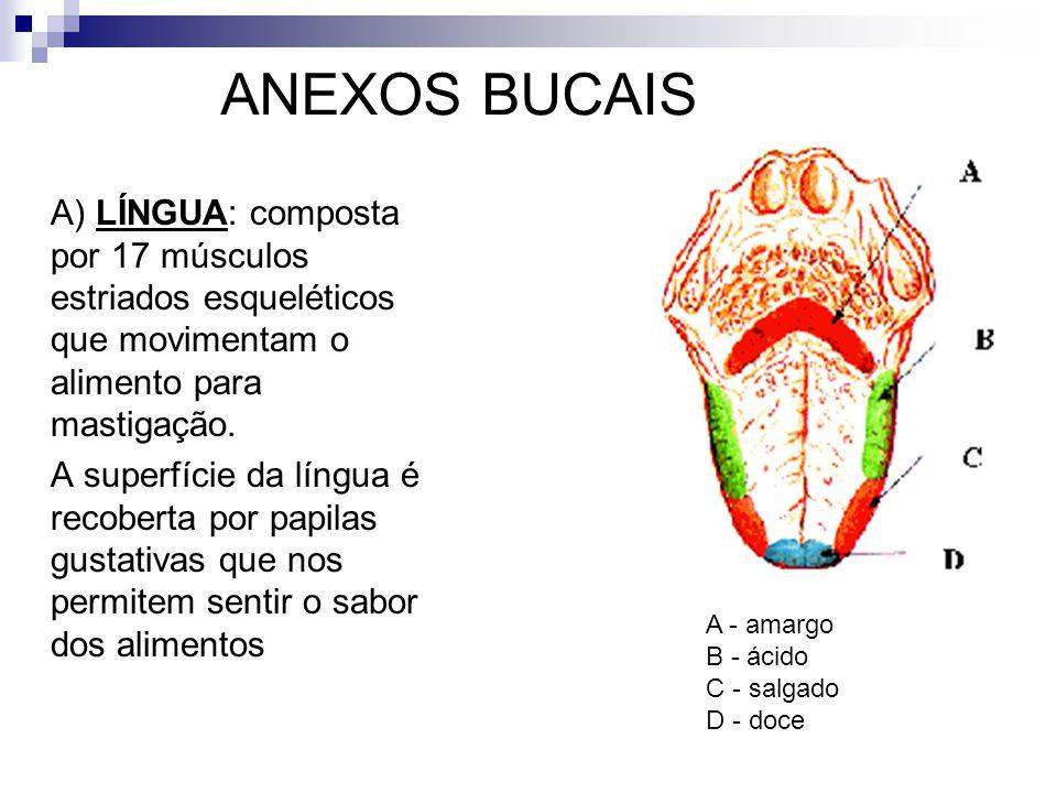 ANEXOS BUCAIS A) LÍNGUA: composta por 17 músculos estriados esqueléticos que movimentam o alimento para mastigação.