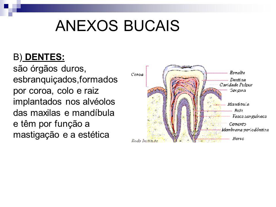ANEXOS BUCAIS