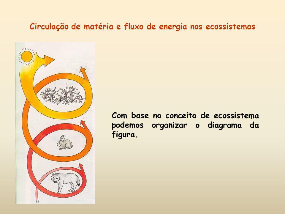 Circulação de matéria e fluxo de energia nos ecossistemas