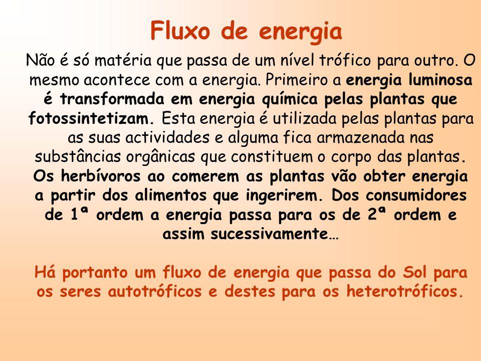 Fluxo de energia
