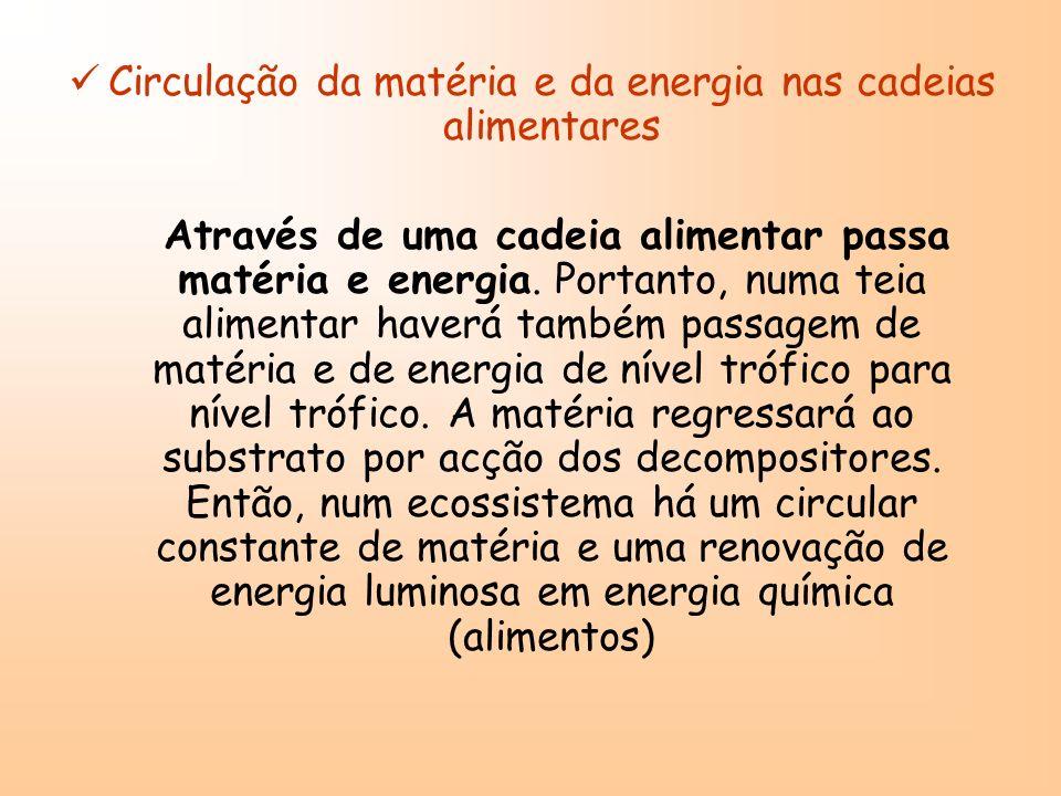Circulação da matéria e da energia nas cadeias alimentares
