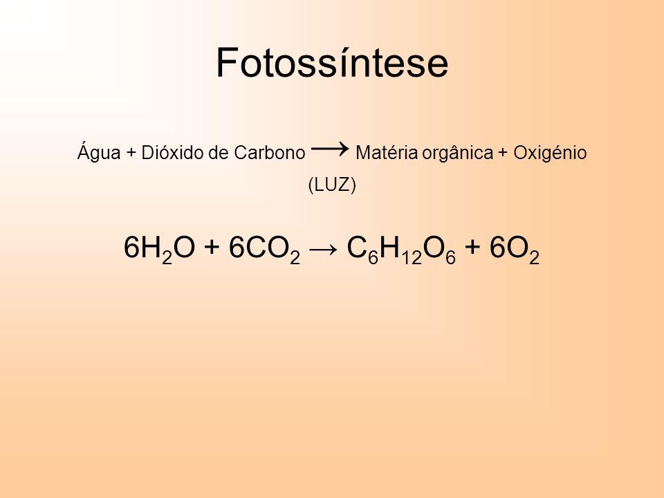 Água + Dióxido de Carbono → Matéria orgânica + Oxigénio