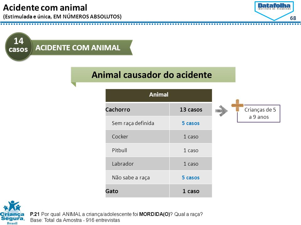 Animal causador do acidente