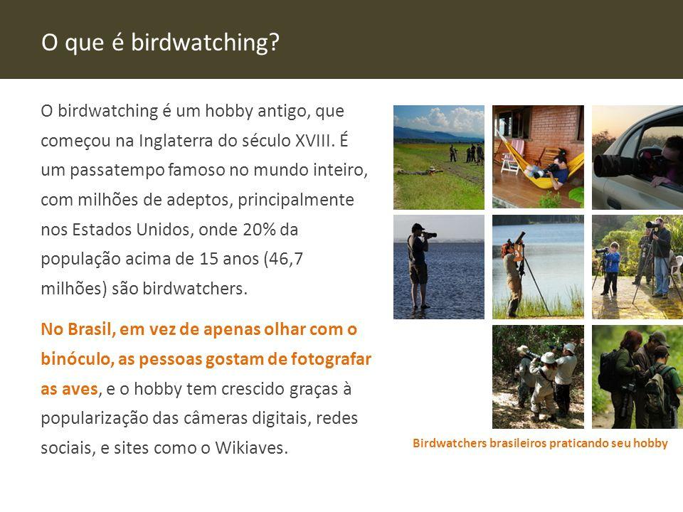 O que é birdwatching