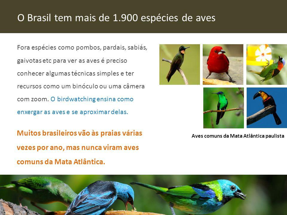O Brasil tem mais de 1.900 espécies de aves