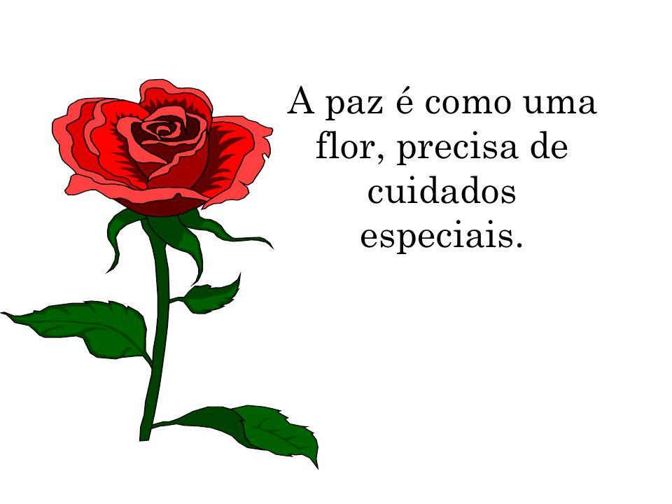 A paz é como uma flor, precisa de cuidados especiais.