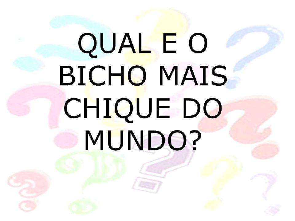 QUAL E O BICHO MAIS CHIQUE DO MUNDO