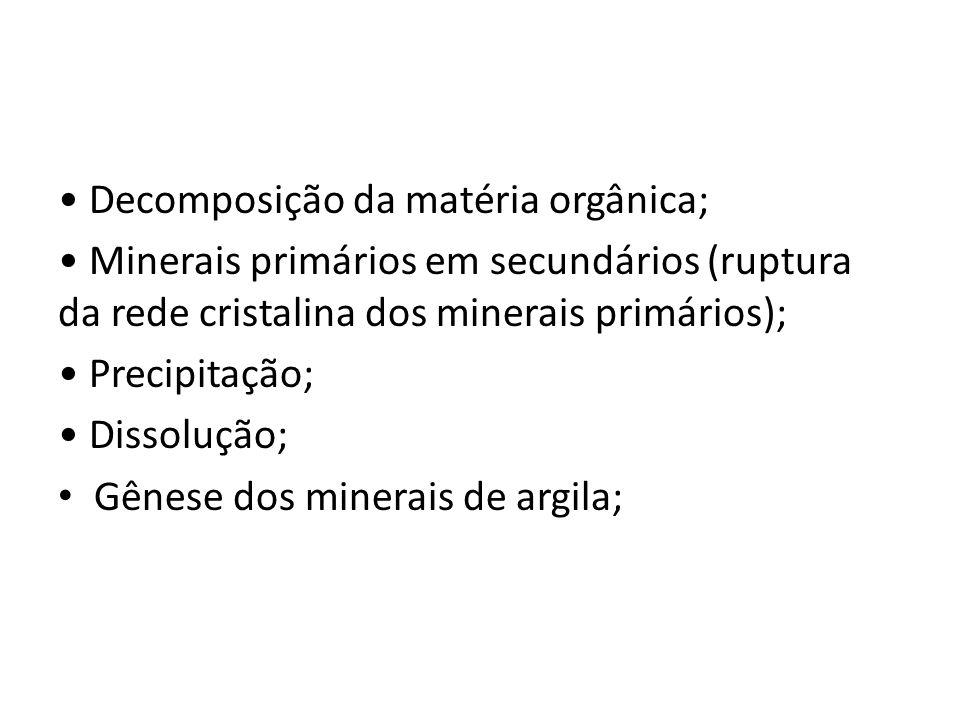 • Decomposição da matéria orgânica;