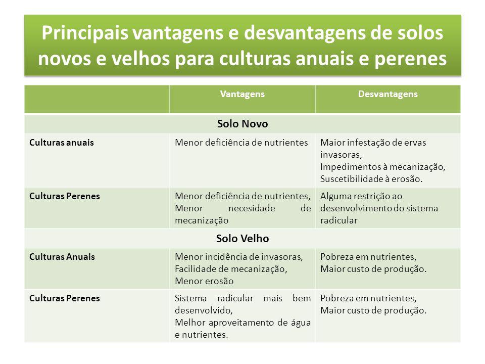 Principais vantagens e desvantagens de solos novos e velhos para culturas anuais e perenes