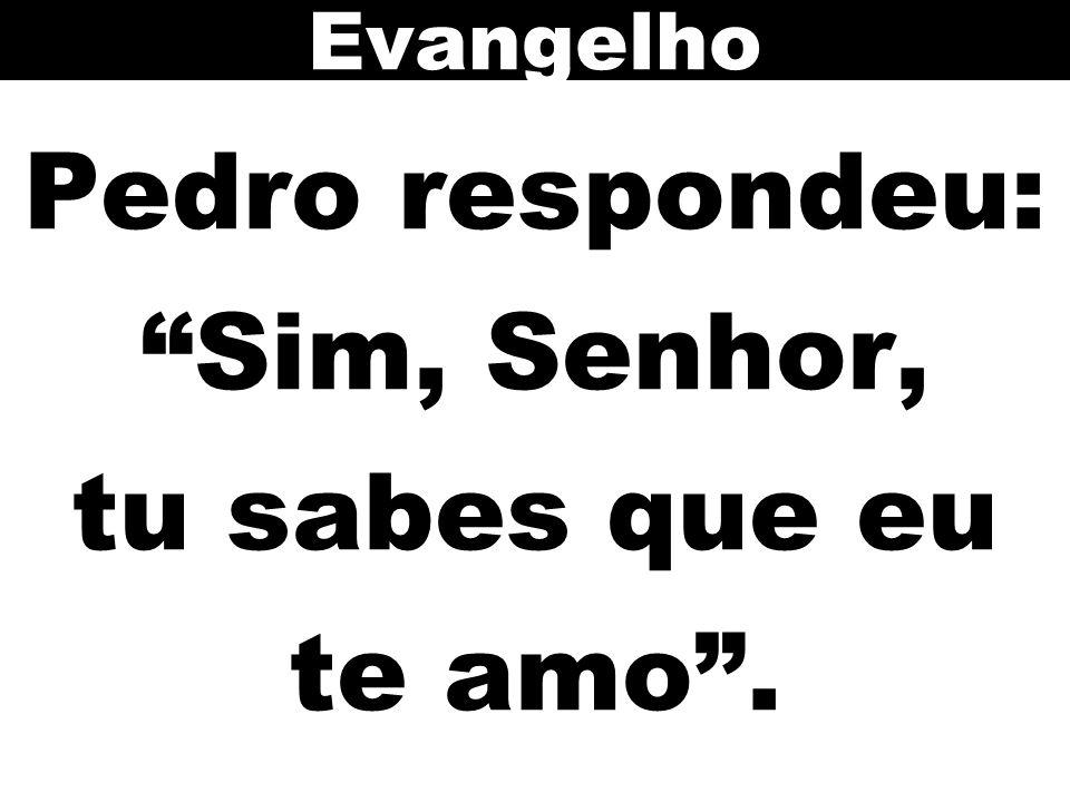 Pedro respondeu: Sim, Senhor, tu sabes que eu te amo .