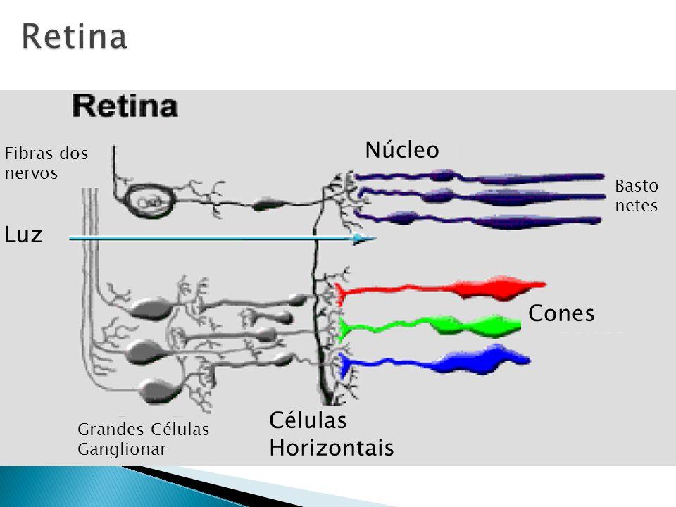 Retina Núcleo Luz Cones Células Horizontais Fibras dos nervos
