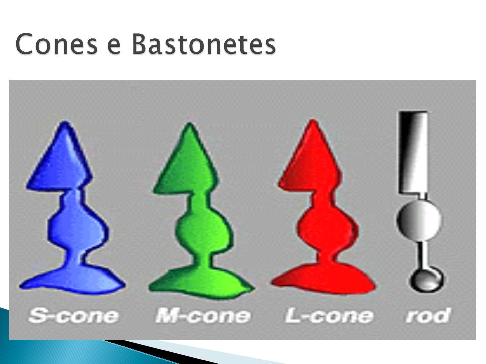 Cones e Bastonetes