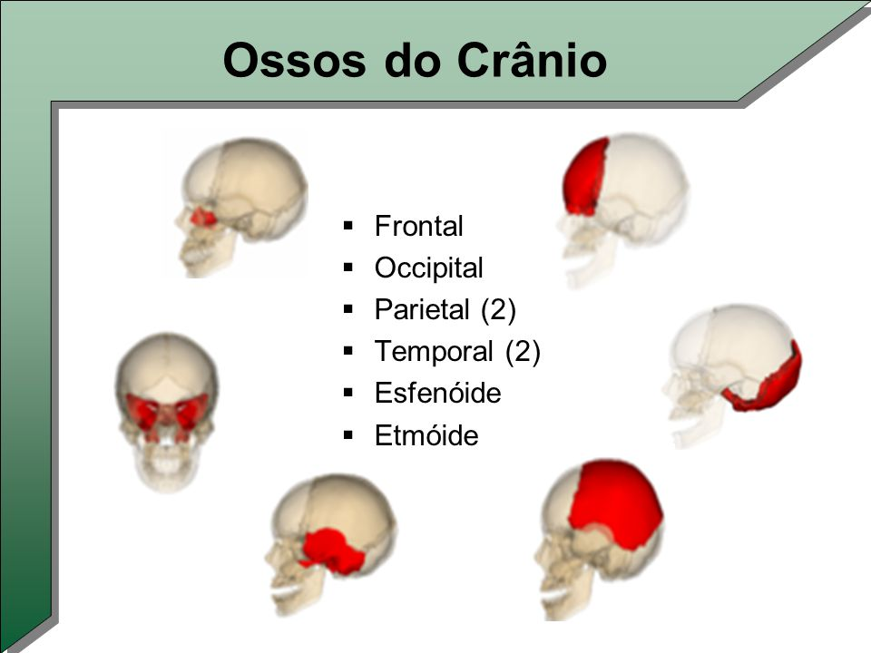 Ossos do Crânio Frontal Occipital Parietal (2) Temporal (2) Esfenóide