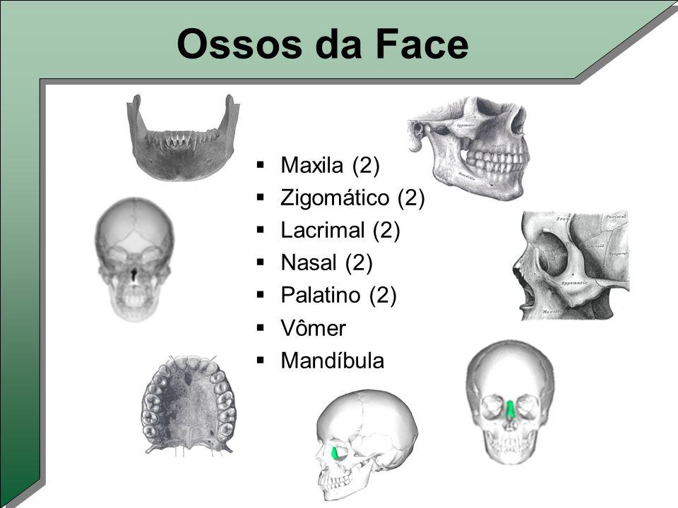 Ossos da Face Maxila (2) Zigomático (2) Lacrimal (2) Nasal (2)
