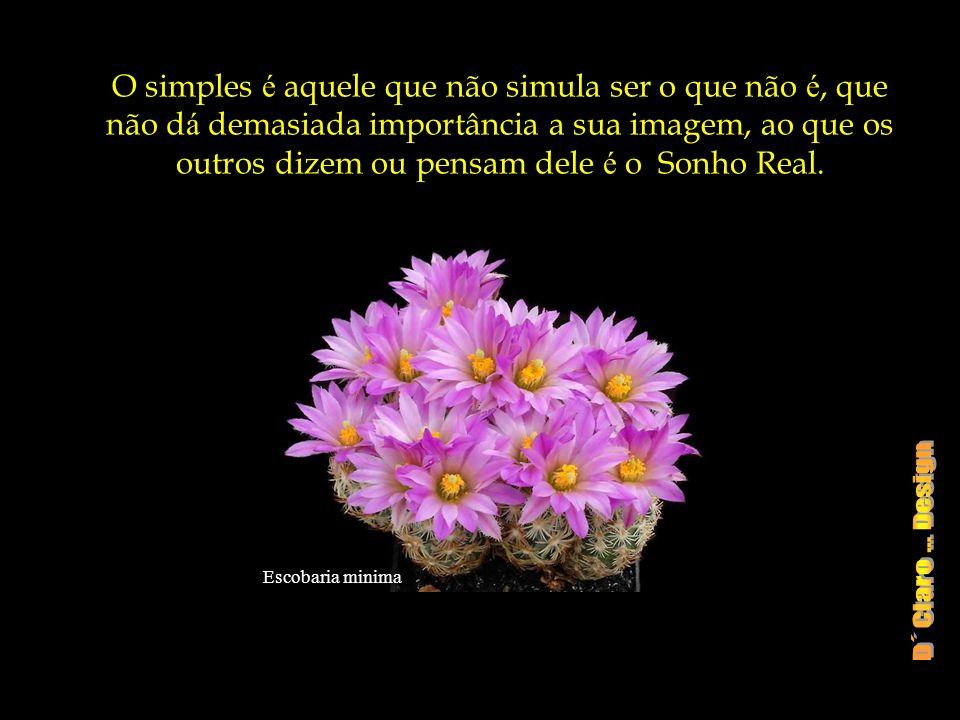O simples é aquele que não simula ser o que não é, que não dá demasiada importância a sua imagem, ao que os outros dizem ou pensam dele é o Sonho Real.
