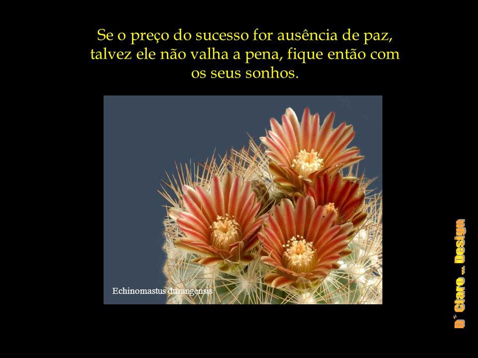 Se o preço do sucesso for ausência de paz, talvez ele não valha a pena, fique então com os seus sonhos.